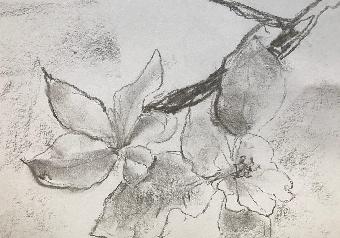 Kunst Therapie Atelier | Apfelblüte in Kohle | A. Tanja Stögermair