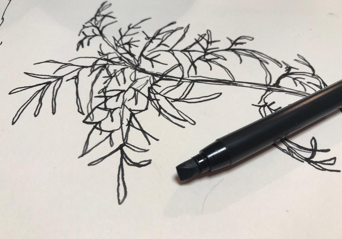 Pflanzenstudie