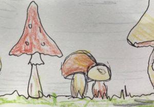 Welcher Pilz bin ich?